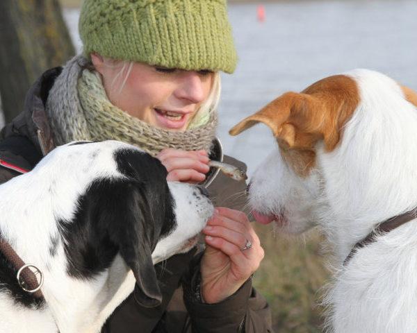 Kontakt Daniela Cröngen Bellosbest Hundebetreuung Düsseldorf