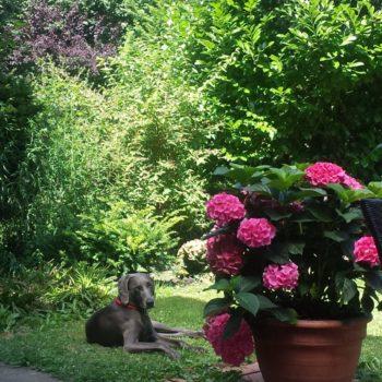 Bellosbest Hundebetreuung, Urlaubsbetreuung