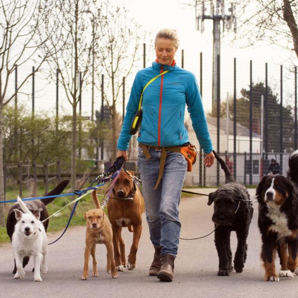 Bellosbest Hundebetreuung, Foto von Renee Heetfeld Fotografie