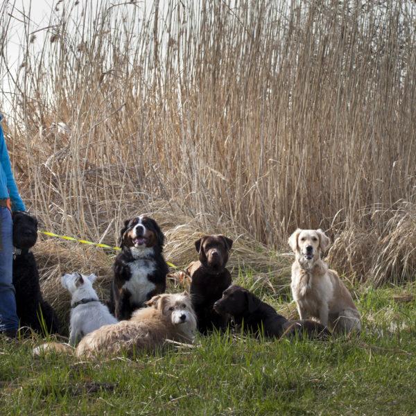 Bellosbest Hundebetreuung, Foto Renee Heetfeld Fotografie