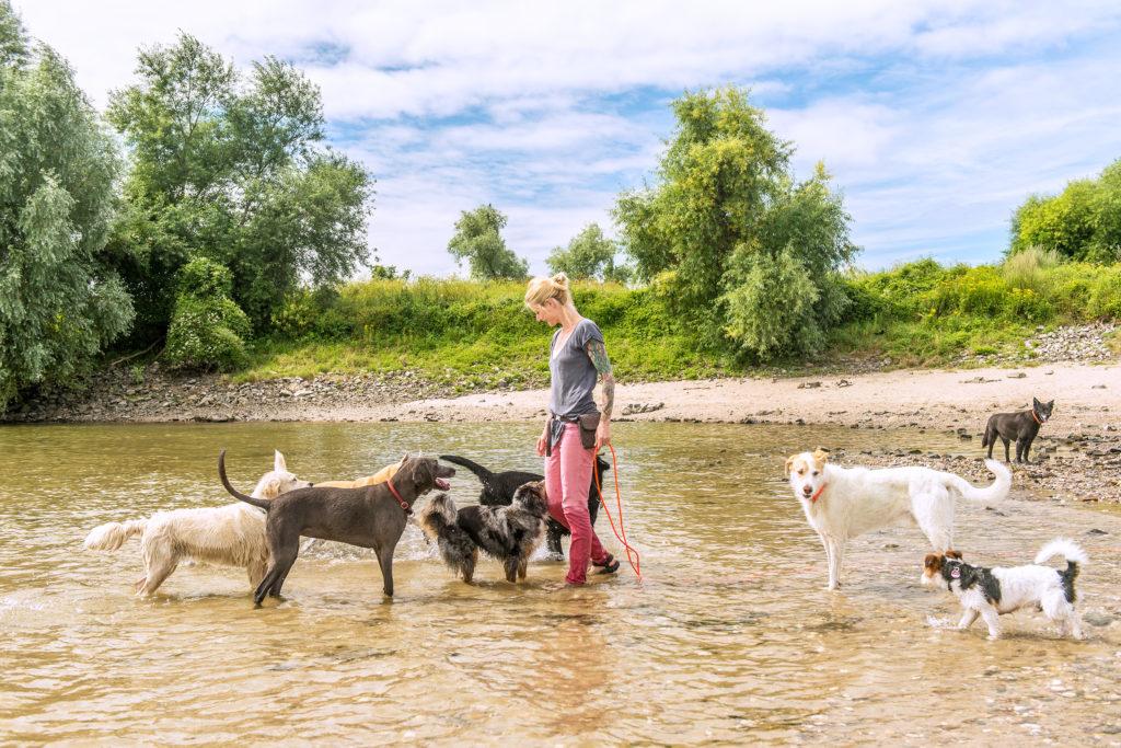 Bellosbest Hundebetreuung, neue Webseite Gassiservice Düsseldorf Foto von Zaubergraphie
