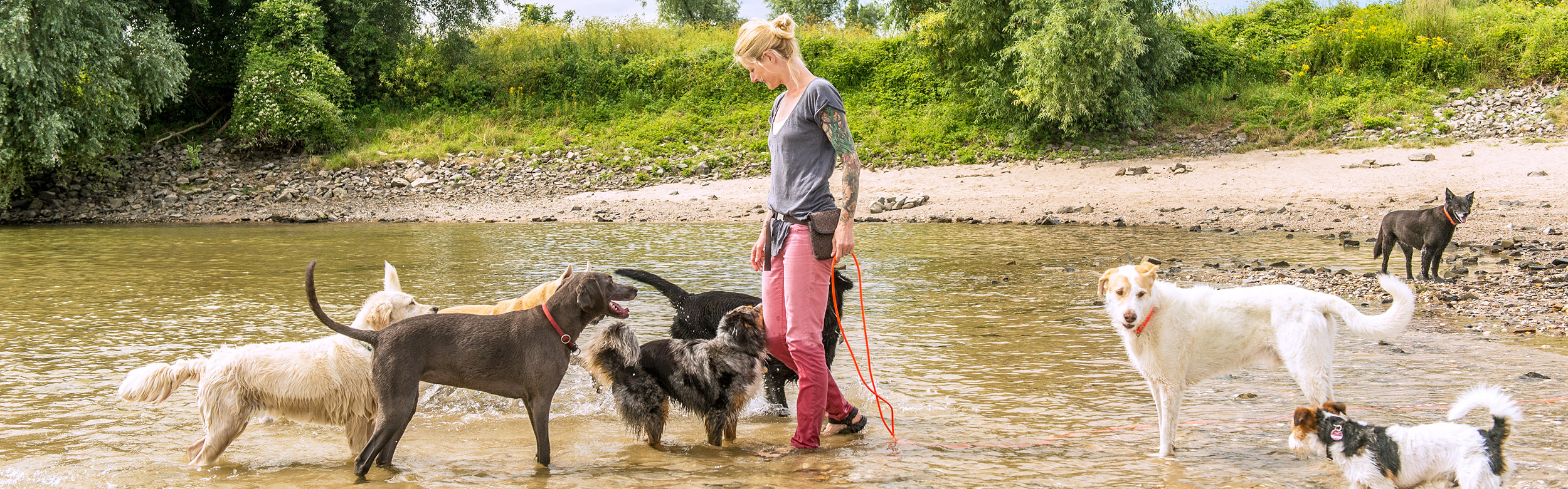 Gassiservice Hundebetreuung Bellosbest Urlaubsbetreuung Ausführservice, Foto von Zaubergraphie